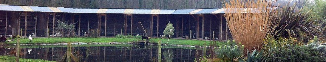 Site Le Pigeon de Mesquer élevage Mesquer - Quimiac