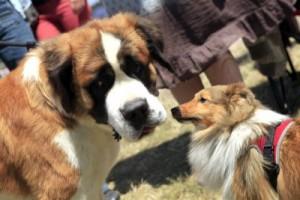 Exposition canine @ Hippodrome de Pornichet | Pornichet | Pays de la Loire | France