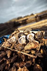 Visite d'établissement Ostréicole @ établissements Retailleau, port de Kercabellec. | Mesquer | Pays de la Loire | France